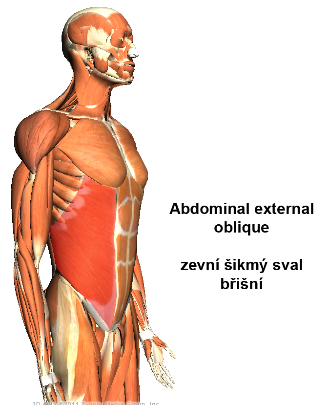 how to train external oblique